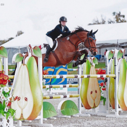 Lorezi-oldenburg-jumper-1