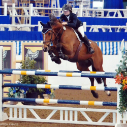Lorezi-oldenburg-jumper-3