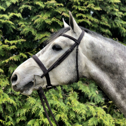 Corlandus-danish-warmblood