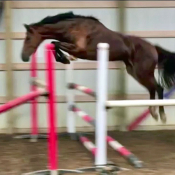 Inzell-kwpn-free-jump