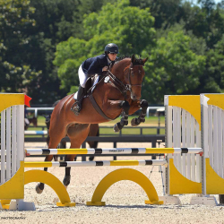 Andycohen-jumper-equitation