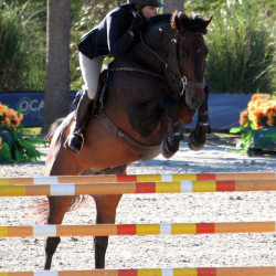 Md-warmblood-jumper-2