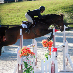 Md-warmblood-jumper-3