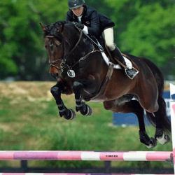 Md-warmblood-jumper