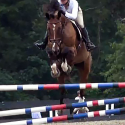 Dumbledore-warmblood-jumper-2