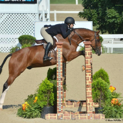 Debonair-hanoverian-hunter-2