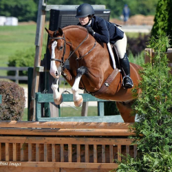 Debonair-hanoverian-hunter-3