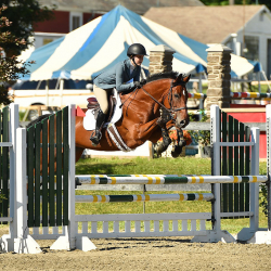 Toni-warmblood-jumper-1