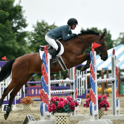 Toni-warmblood-jumper