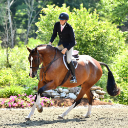 Dionysus-equitation-canter