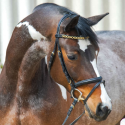 Belaga-german-sporthorse-portrait